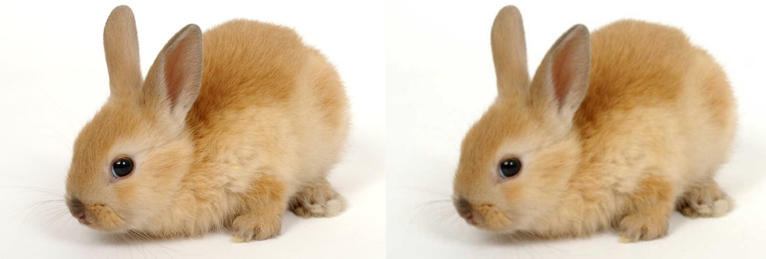 Gaussian blur convolution on a photo of a rabbit.